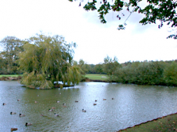 Village pond Pirbright